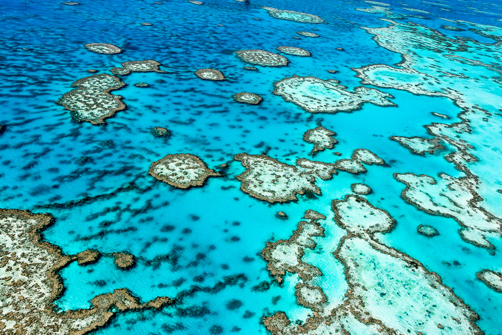 According to a new study, the Great Barrier Reef almost drowned due to rapid sea-level rise during the last Interglacial Period, more than 125,000 years ago.