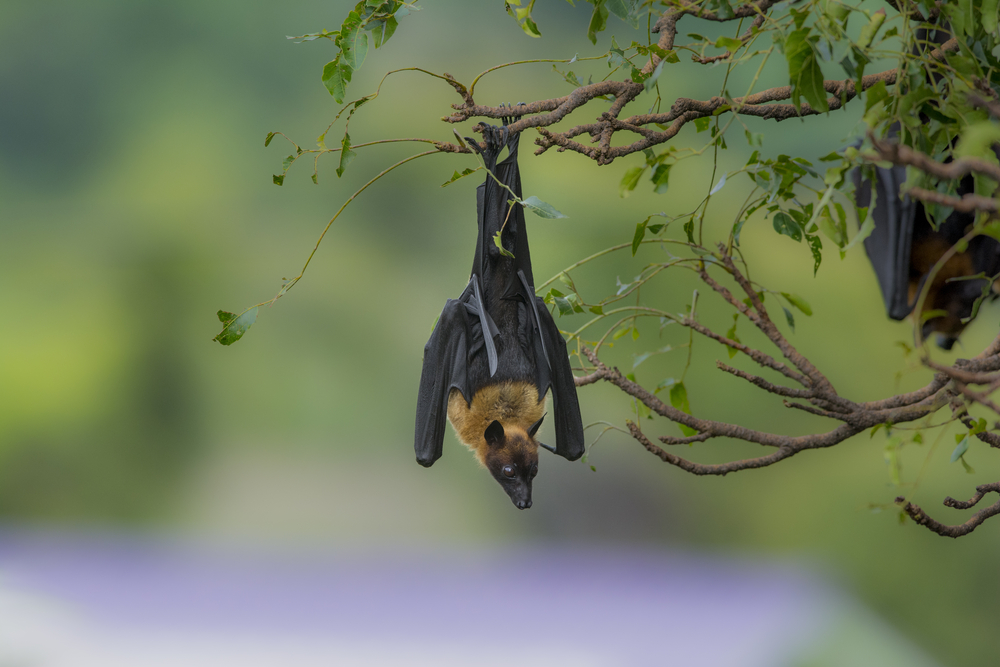 Bat-friendly tequila has helped one bat species fly off the endangered species list.