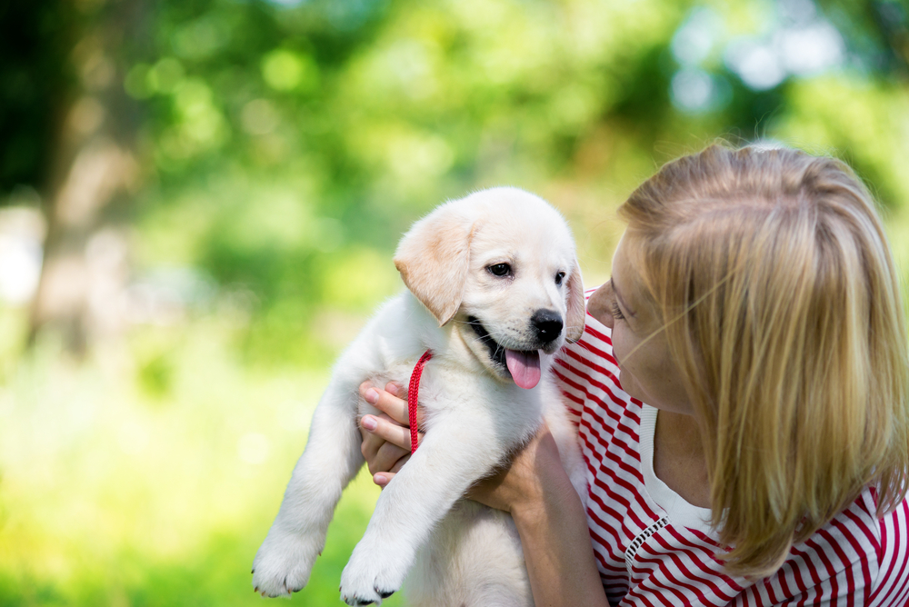 An international team of scientists studying dog behavior got a look at human psychology, too, in a recent study of puppy talk.