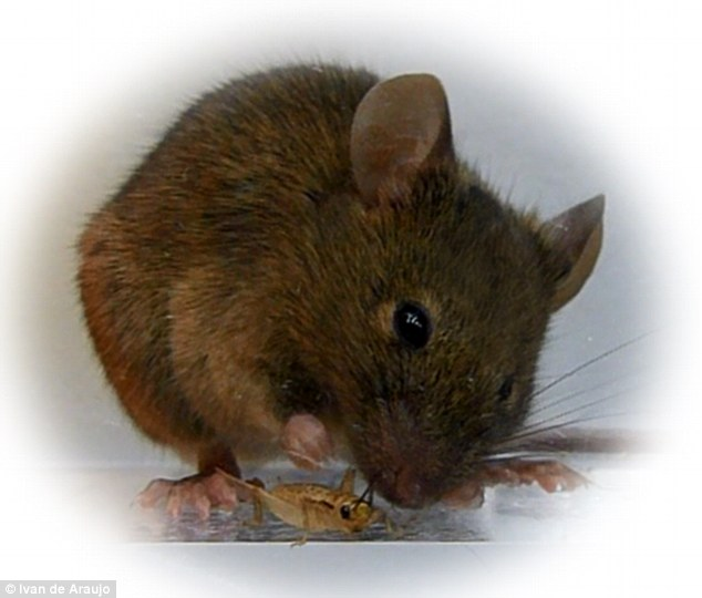 It sounds like a science fiction plot. Using lasers, scientists brainwash an unwitting subject to stalk and kill its prey. But for these hapless zombie killer mice, it's all too real.