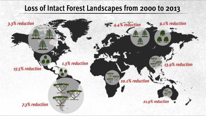 After many years of study on the subject of shrinking forest landscapes P. Potapov Md., and colleagues at the University of Maryland in College Park, published the results last week.