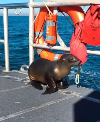 A sea lion was spotted caught up in fishing gear off of the Southern California coast and received a hand from the Coast Guard.