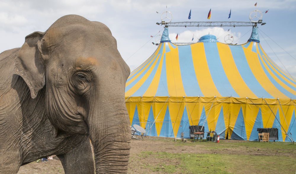 Some animal rights groups are celebrating the end of Ringling Bros. and Barnum & Bailey Circus.