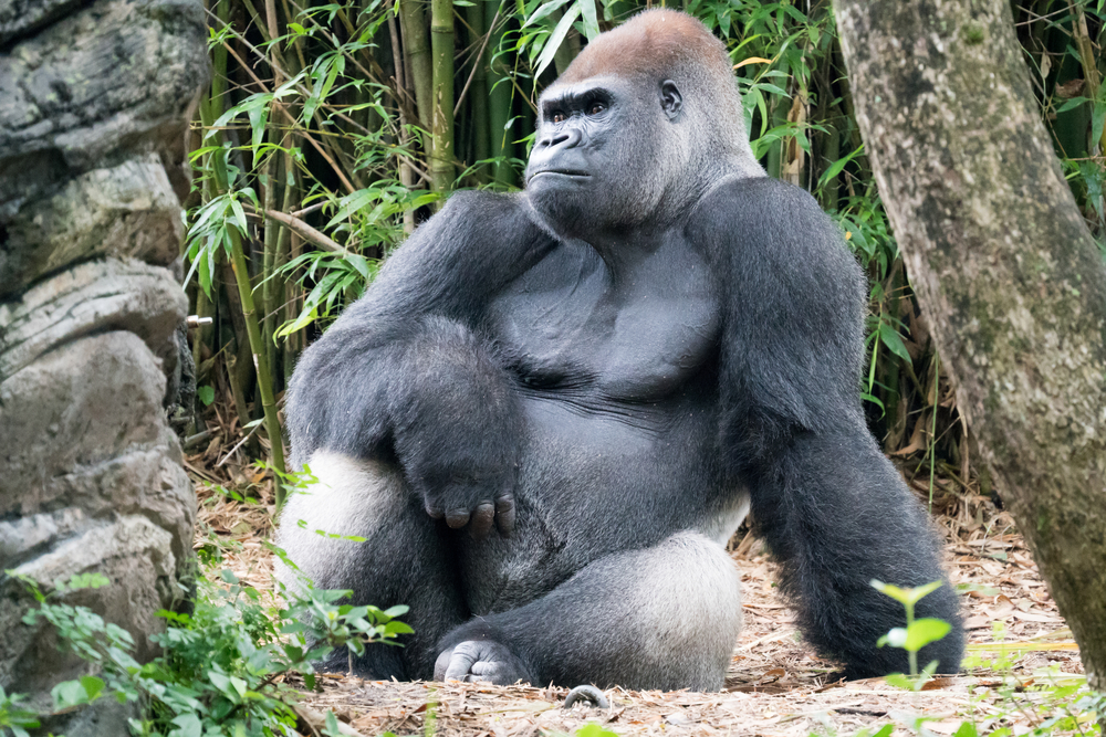 Harambe the gorilla was one of several favorite celebrities of the Animal Kingdom who died in 2016.