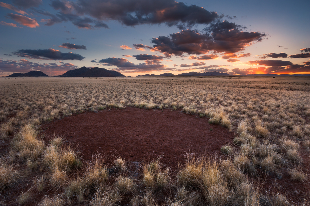 Fairy circles consist of intricate circles of plant life that form a ring. Inside of each circle, nothing grows, and for years, nobody knew why.