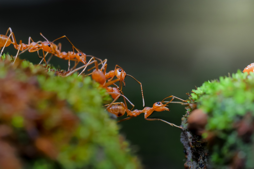 It's been an odd week for ant news. According to two new studies, ants change jobs over their lifespan and are adept at navigating and walking backwards.
