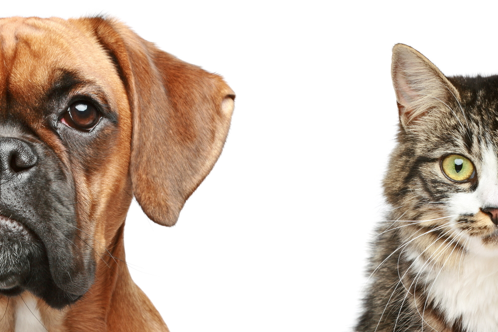 Are cats really as smart as dogs? Scientists may have finally settled the question once and for all – and cat owners can finally celebrate.