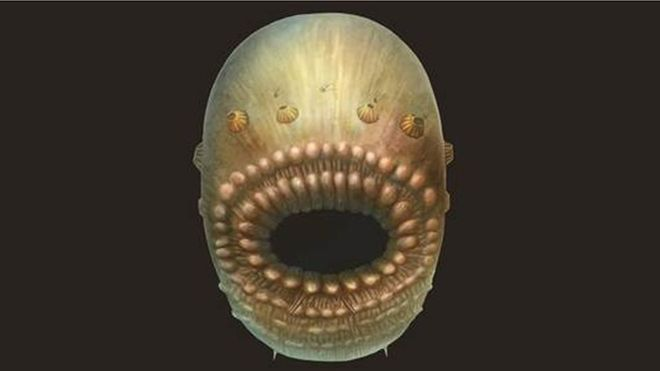 """Oldest human ancestor revealed. When you look through family photos, it's often easy to see where you got your blue eyes or turned-up nose. It may come as a surprise, then, that none of us resemble the creature that scientists are calling our """"oldest human ancestor."""""""