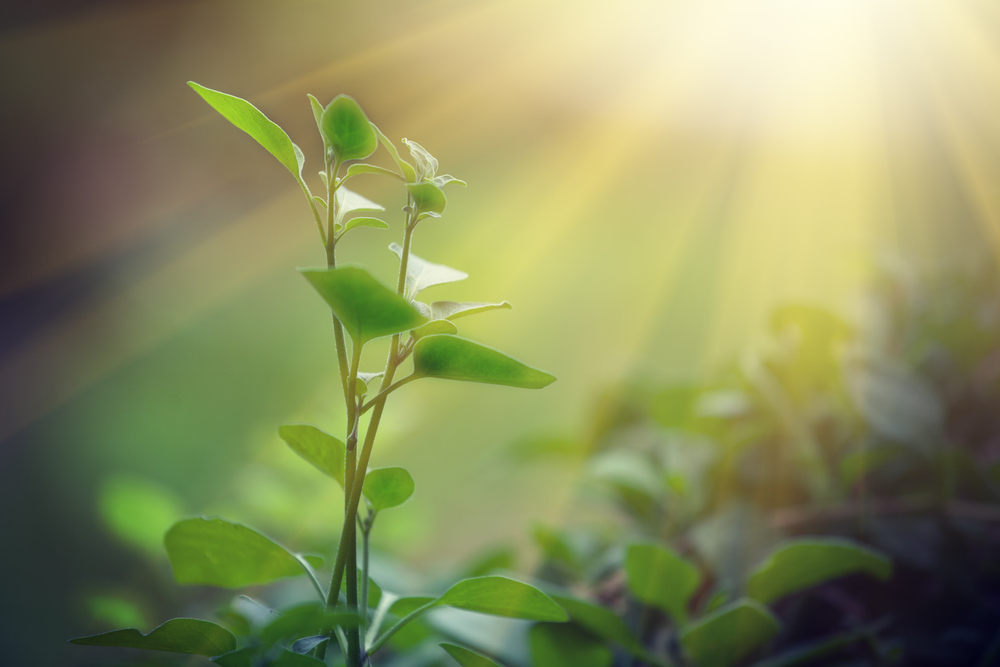 According to a team of scientists, the discovery of a new microbe may have provided some clues regarding the evolution of photosynthesis.