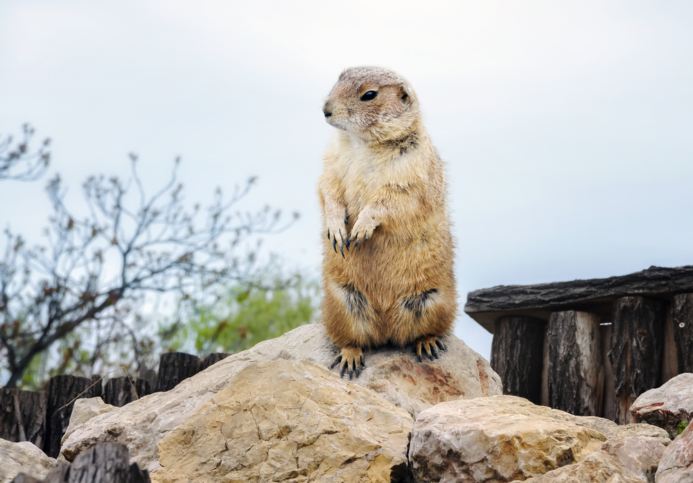 Groundhog Day – or some form of it – has been celebrated for centuries all over the world. But the history and significance behind the day may surprise you.