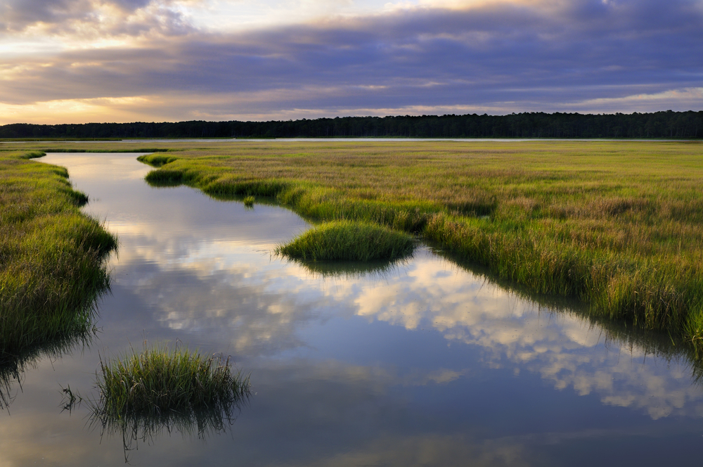 Shellfish and seabirds aren't the only ones that will suffer as the nation's salt marshes are submerged by rising sea levels.