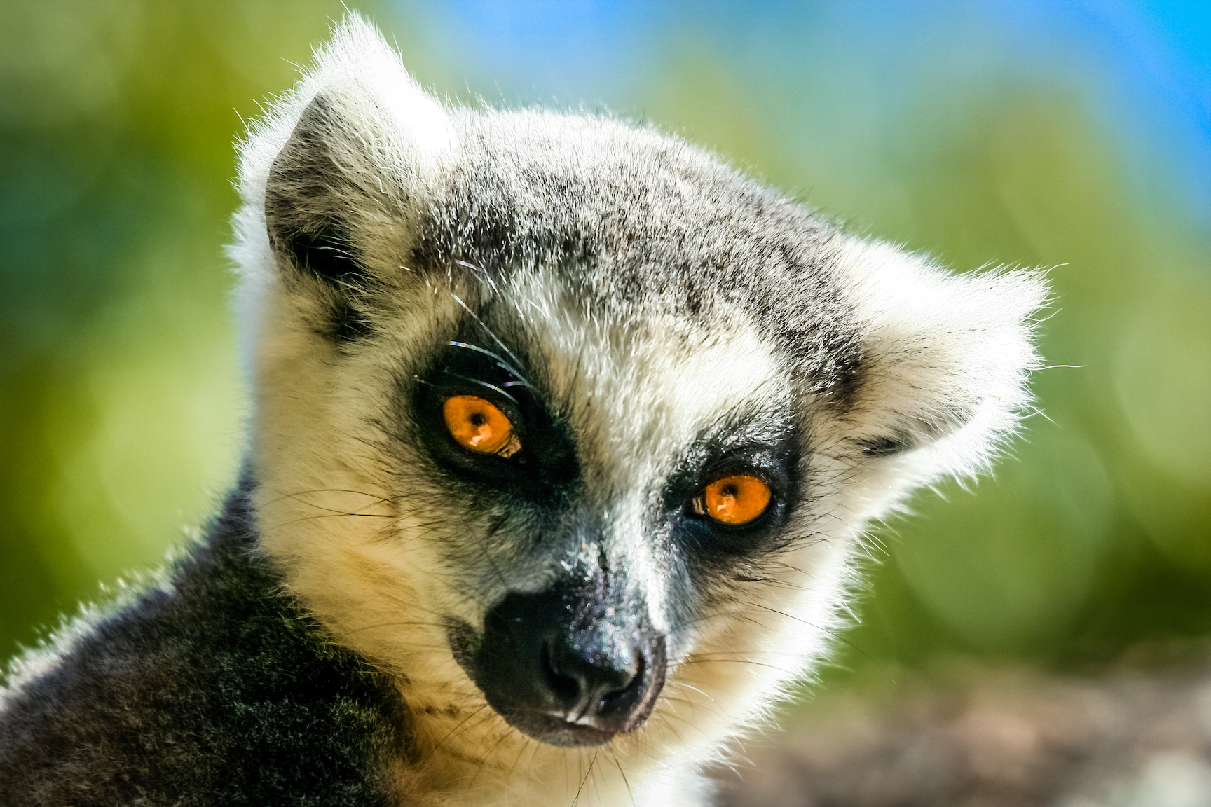 Sounding like something out of a James Bond movie, scientists are using facial recognition technology to track and gather data on lemurs.