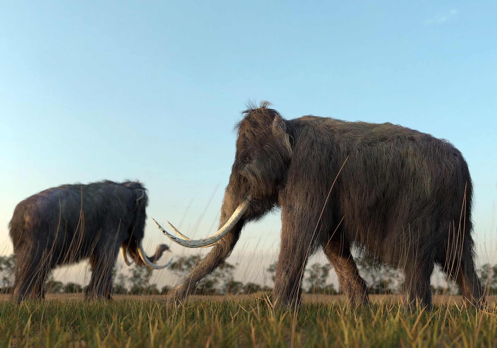 You'd think Jurassic Park movies would have warned scientists not to bring dinosaurs back from the dead. But woolly mammoths might be making a comeback!