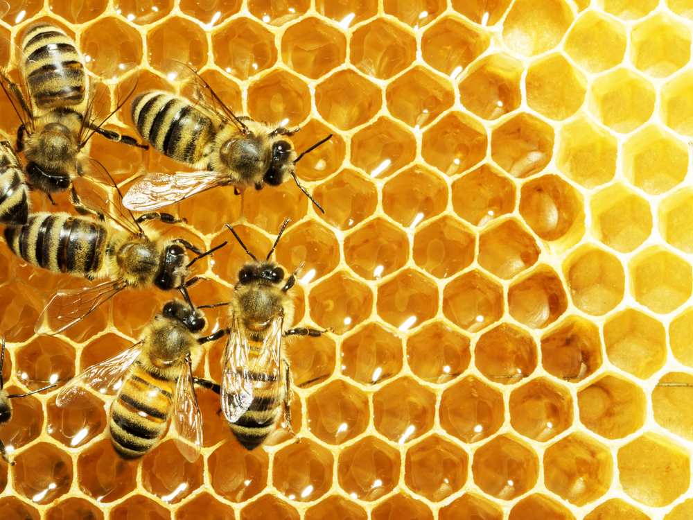 Soon farmers will have an app to help them save the bees! It can be a laborious process for a farmer to encourage bees to pollinate their crops.