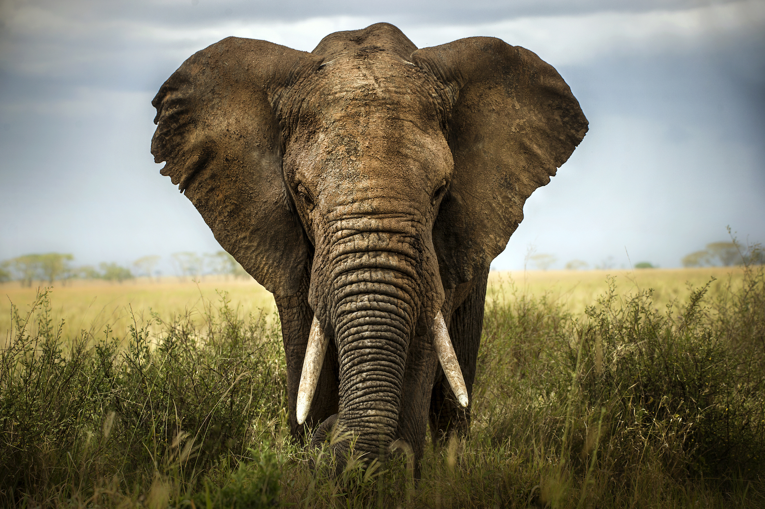 Authorities in Central Africa have cracked down on elephant poaching. It's shocking how little effect it had on the elephant population.