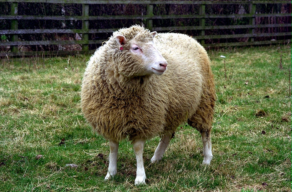 This week marks the 20th anniversary of the unveiling of Dolly the cloned sheep, who created by scientists at The Roslin Institute in Edinburgh.