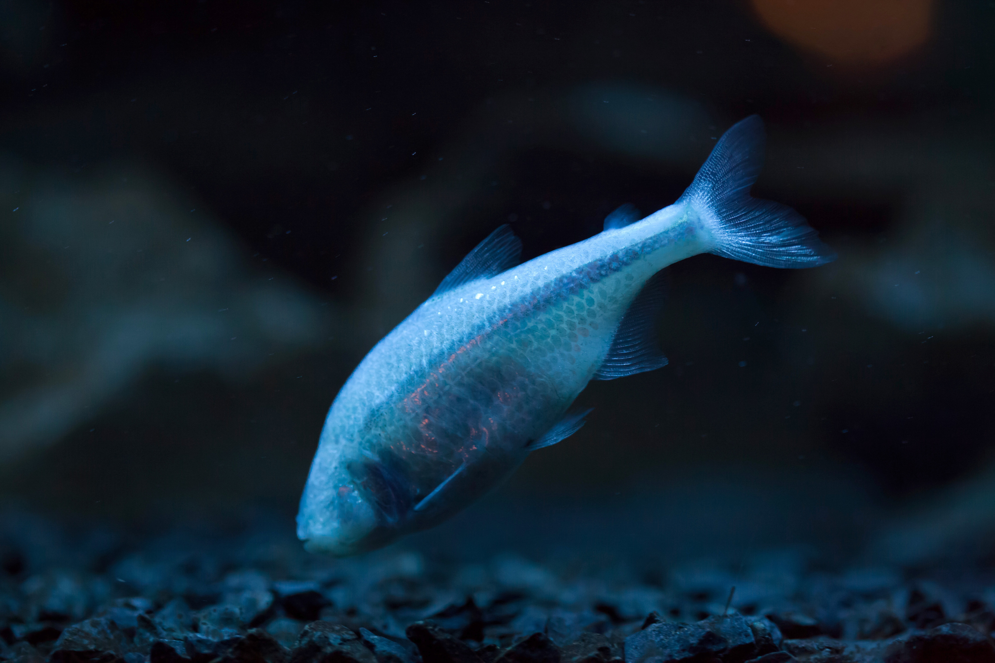 Do humans really need eight hours of sleep? Dr. Alex C. Keene sat down with Earth.com to discuss his research on sleep and the Mexican cavefish.