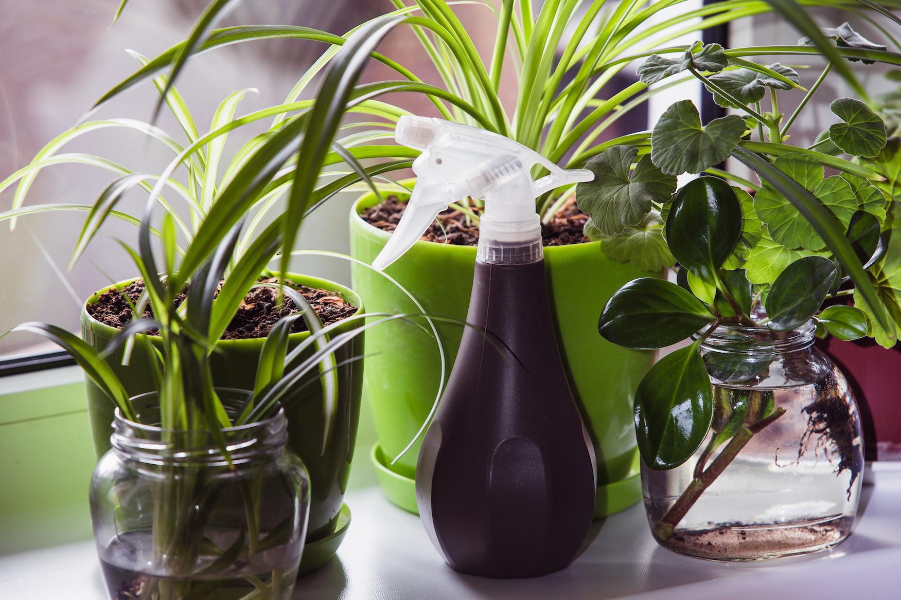 Today's Video of the Day comes from the American Chemical Society and features a look at how everyday houseplants can help you cut down on indoor air pollution.