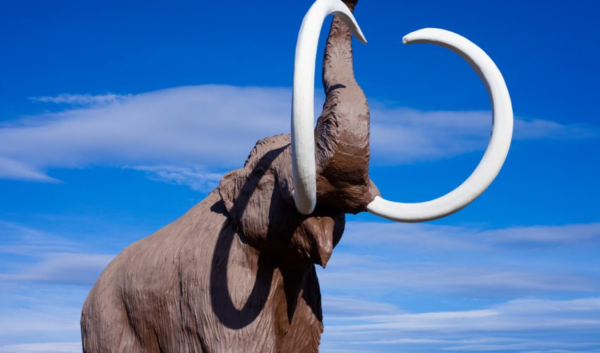 A team of scientists at Harvard University is working to recreate woolly mammoths.