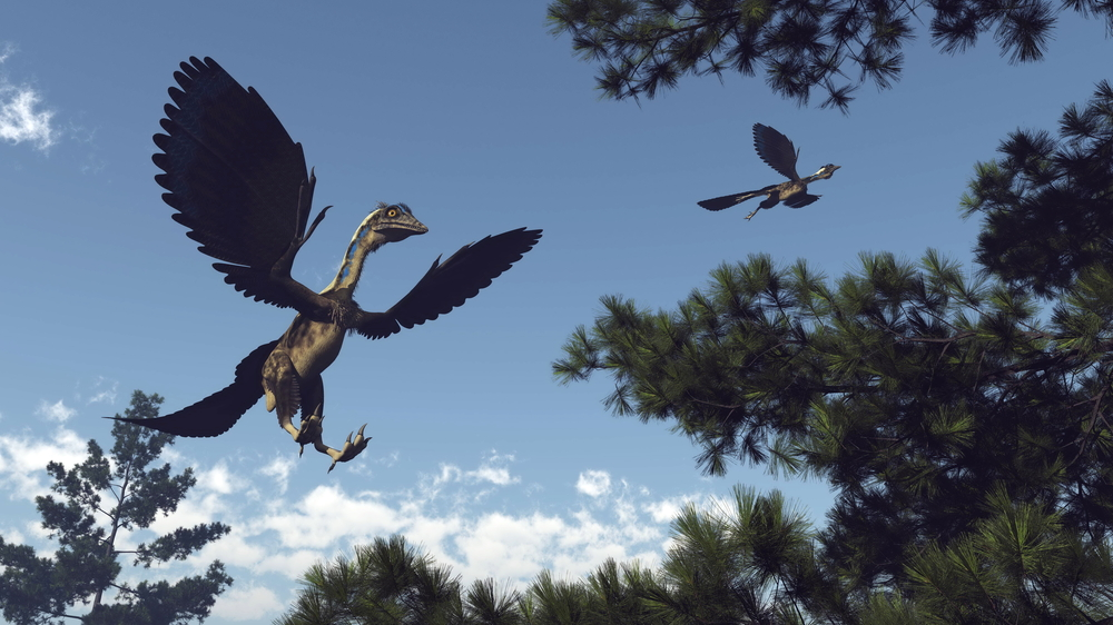 New fossil discoveries have shed light on the complex journey from dinosaur to modern bird.