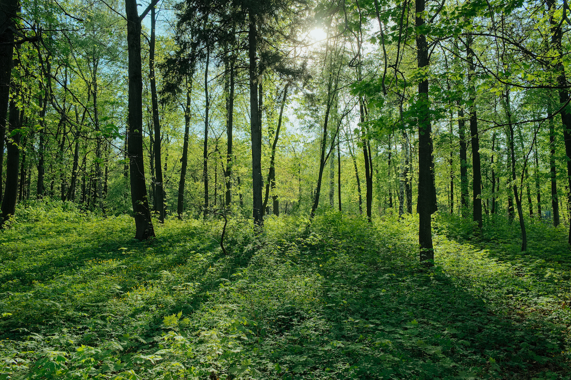 Forests are an important tool for mitigating the effects of climate change. But what can we realistically expect in terms of mitigation potential?