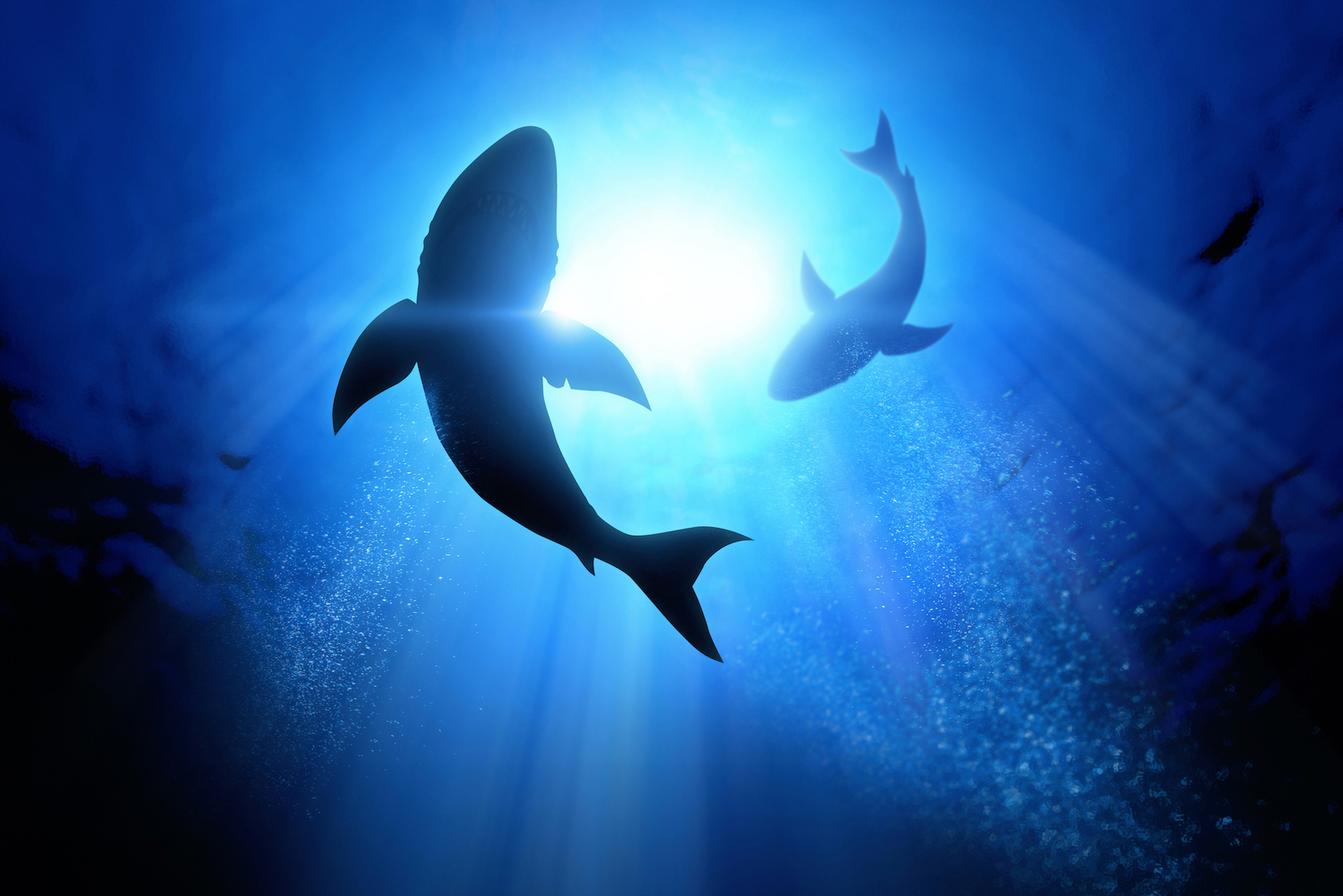 Sharks can detect your heartbeat in the water and can respond to the heartbeat of their prey through their super-sensitive electro-sensory organs.