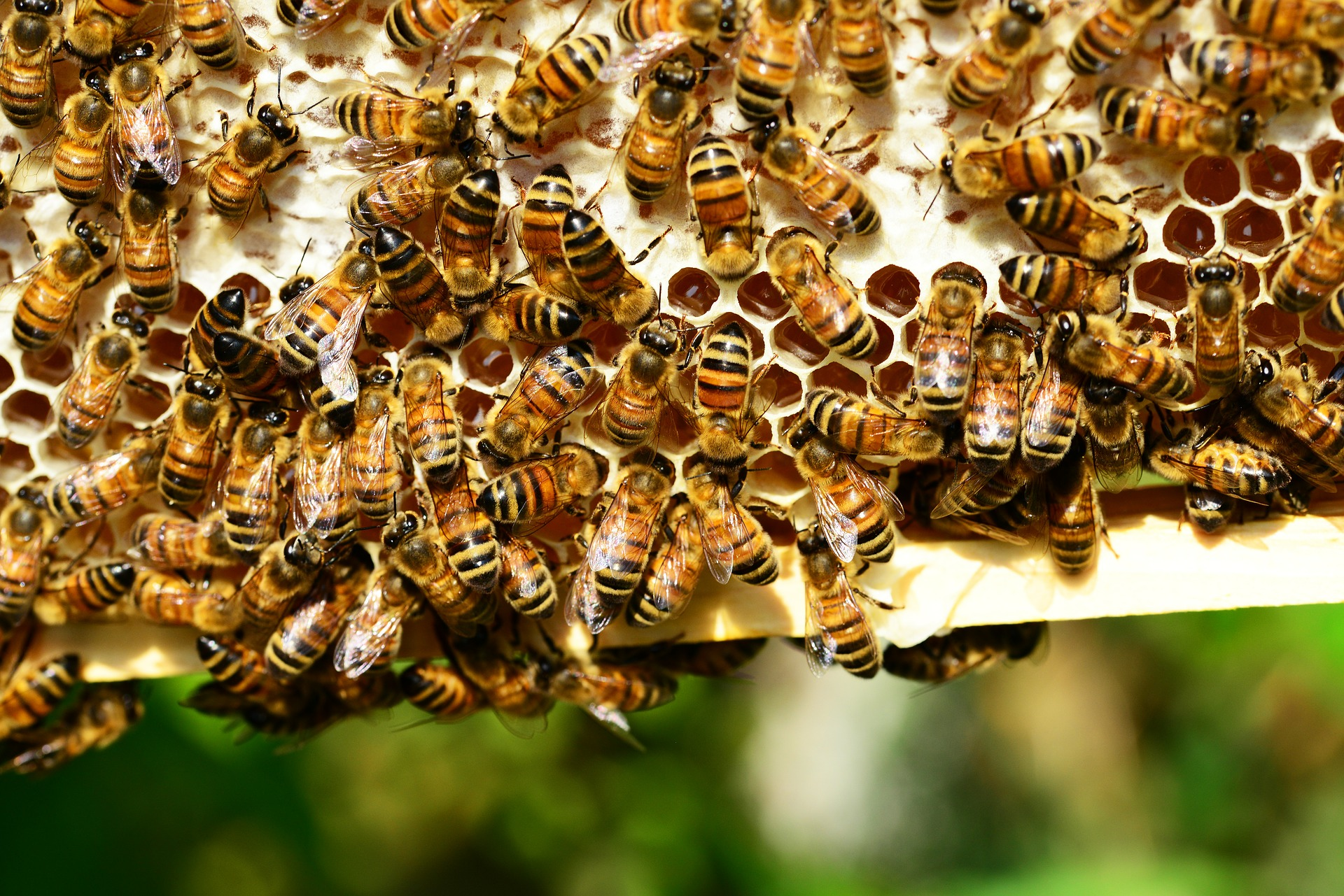 DNA sequencing could create superbees capable of withstanding the parasites and pathogens that are decimating their populations across the globe.