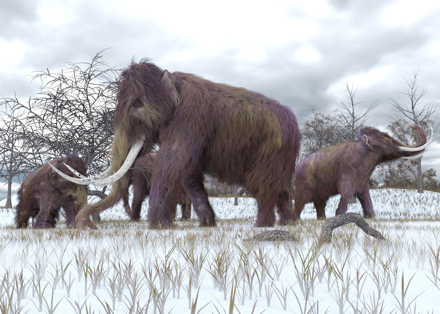A Russian landowner has a plan to combat climate change by reverting a part of Siberia back to the Mammoth Steppes it was up until 12,000 years ago.