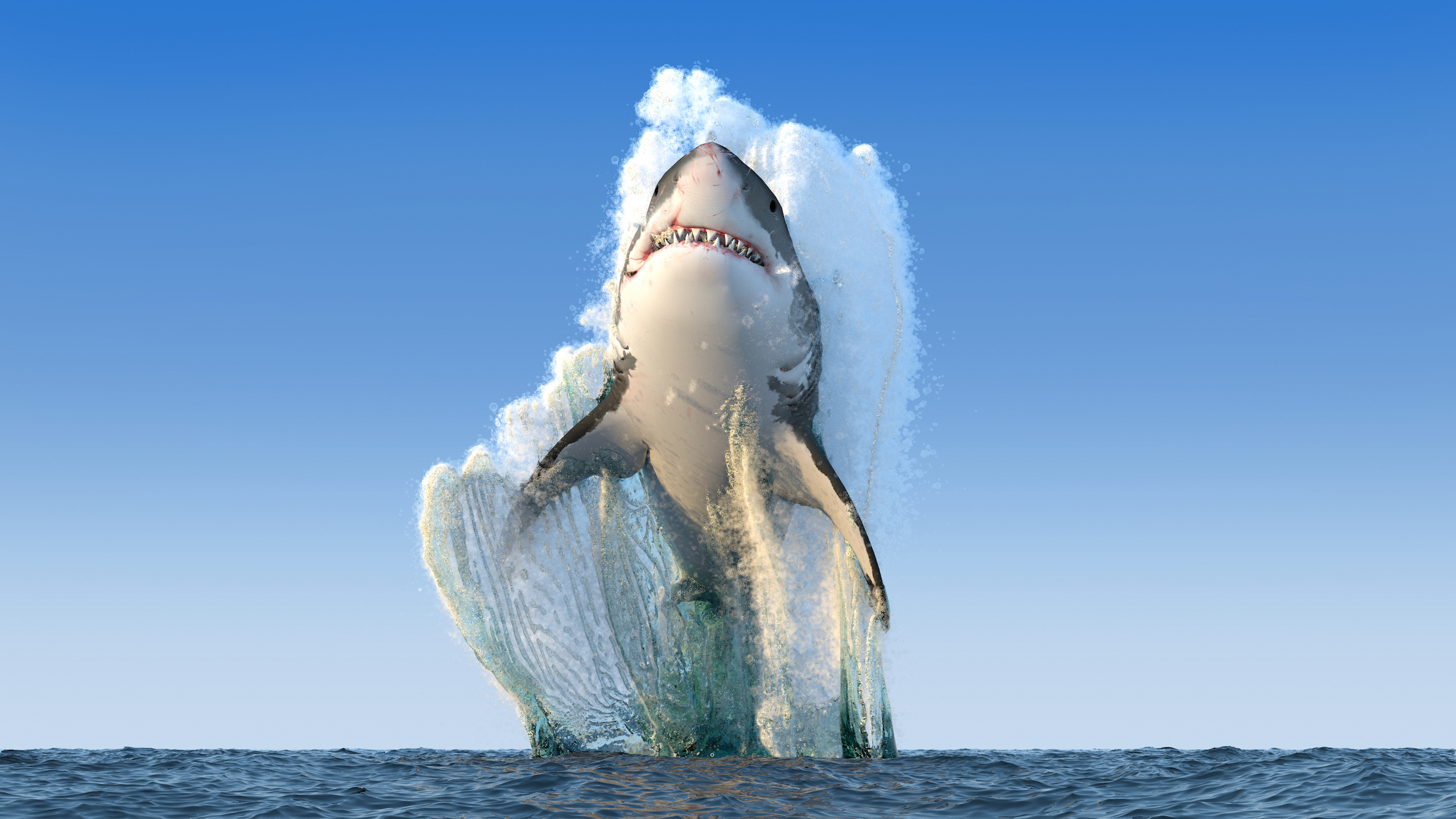 According to a new study, great white sharks are swimming toward Cape Cod in rising numbers for the second straight year.