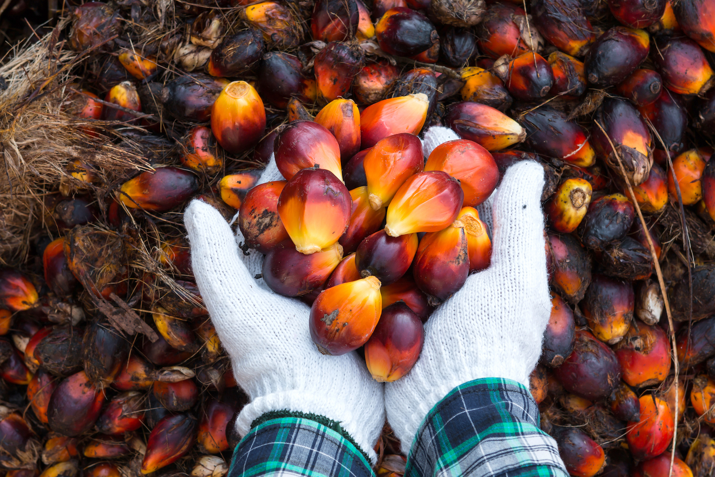 Can you think of any product you give less thought to than palm oil? And yet it's an ingredient in about 50% of the products you find at the supermarket.