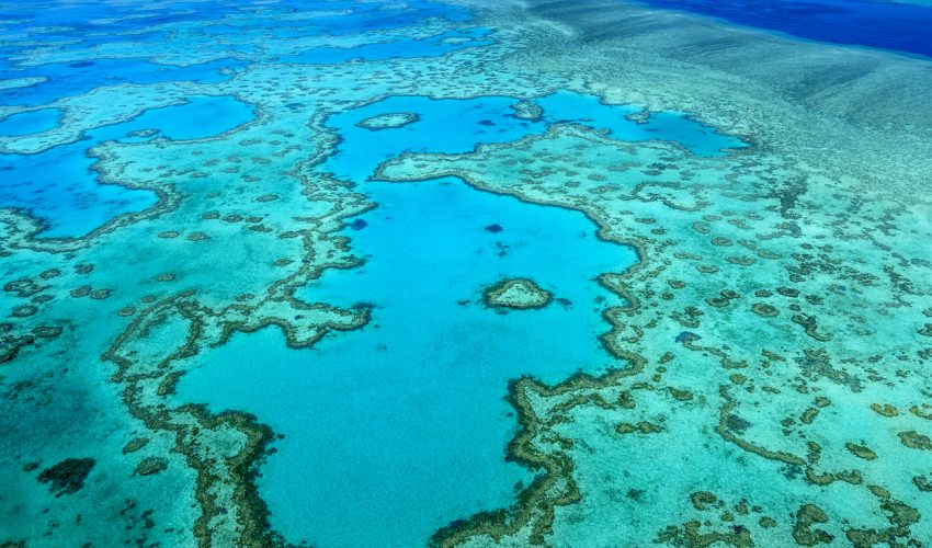 The blue corals of one of the most stunning tropical Southeast Asian reefs are now dead, as are about half of the global coral populations worldwide.