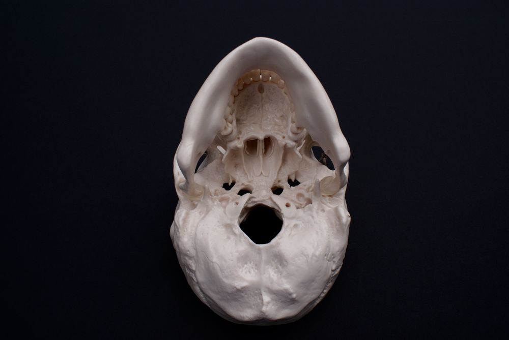 A new study offers support for the theory that the human skull changed when our ancestors began moving on two legs instead of four.
