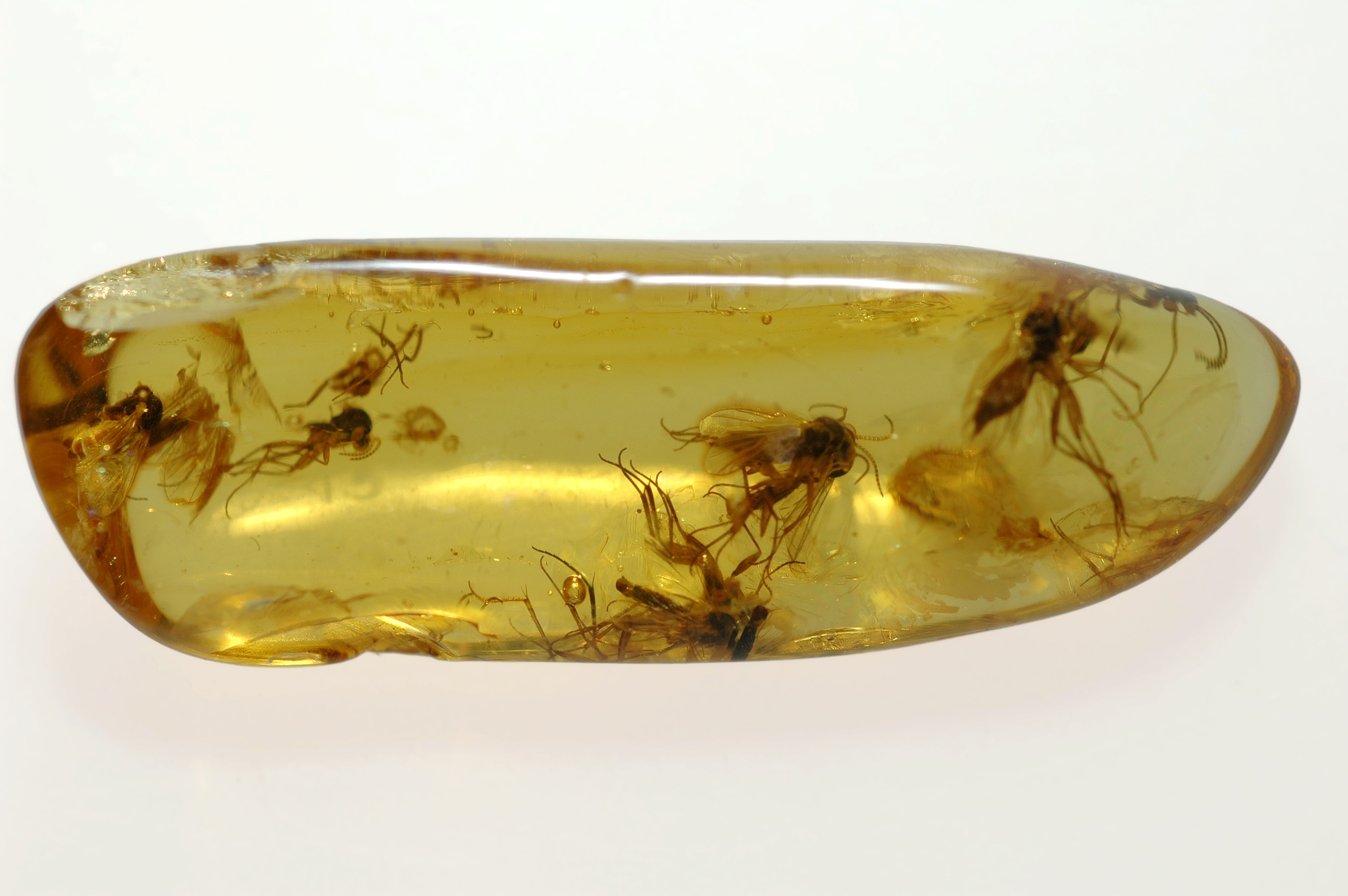 Researchers found, trapped in amber in Burma, was three fossilized male damselflies from the pre-Cretaceous Period, some 100 million years in the past.