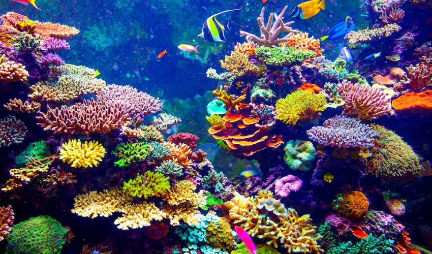 A new study by Smithsonian scientists has revealed that dead zones affect dozens of coral reefs and threaten hundreds more.