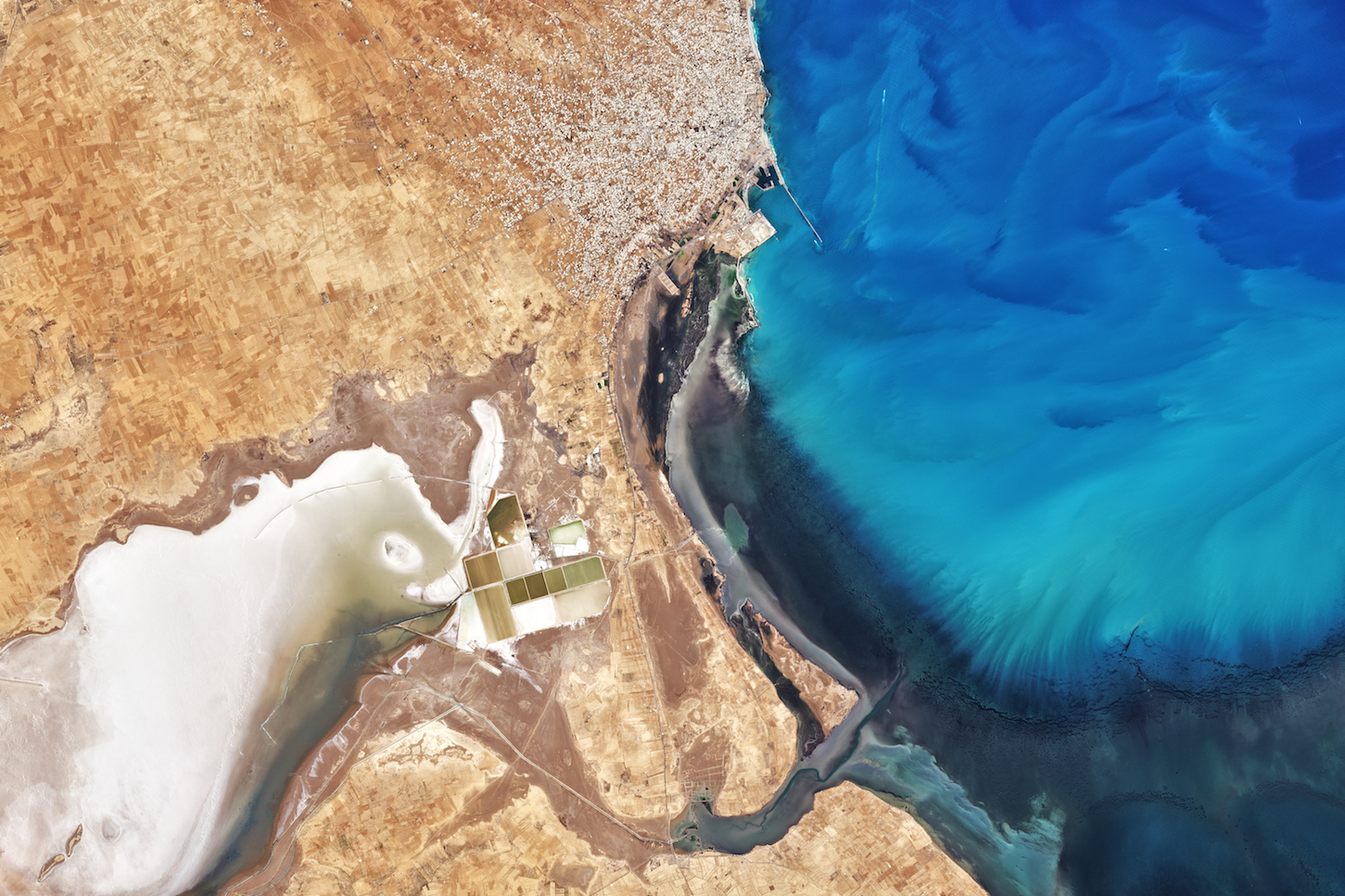 Today's Image of the Day comes thanks to the NASA Earth Observatory and features a look at a stunning phytoplankton bloom just off the coast of Tunisia.