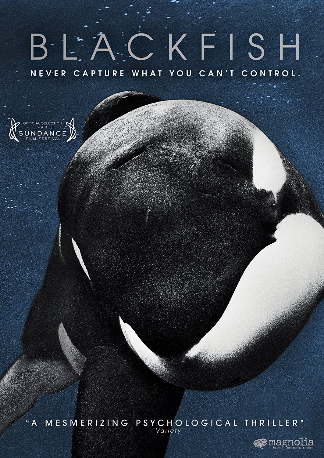 Blackfish made a splash upon its 2013 release, taking on the entire SeaWorld business model of training whales for entertainment