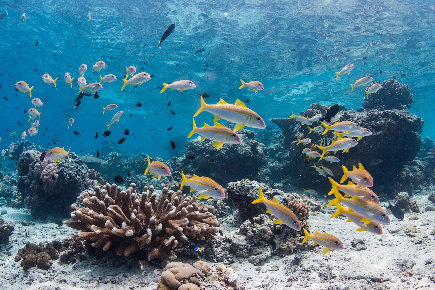 A study found that reef fish eat more algae when surrounded by other fish, which may be crucial to saving coral reefs for algae overgrowth.