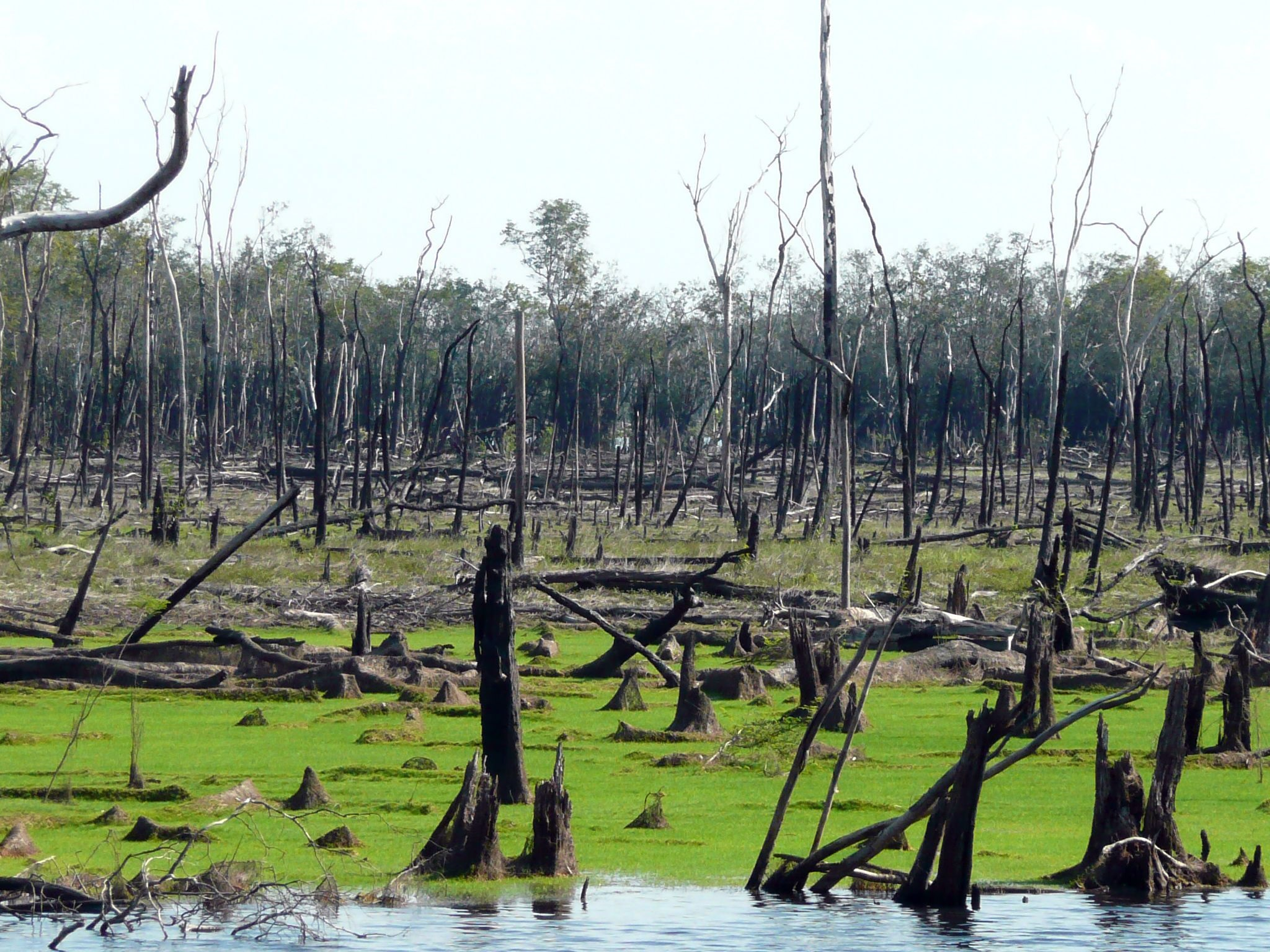 Although it may seem counter-intuitive, new research shows that the floodplains of the Amazon are actually quite prone to forest fires.