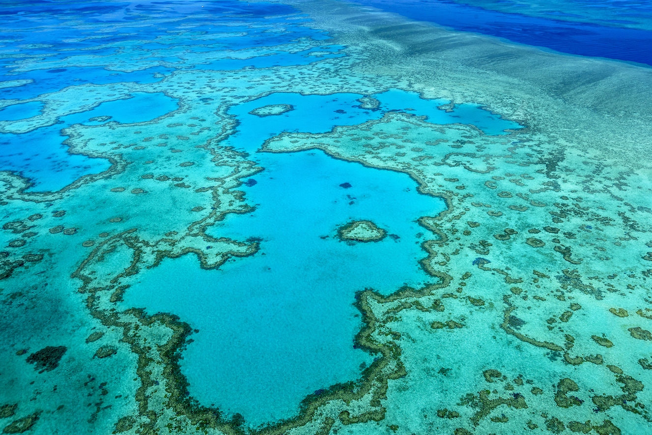 Australia's Great Barrier Reef is renowned for its pristine natural beauty. But now, significant parts of it are on life support.