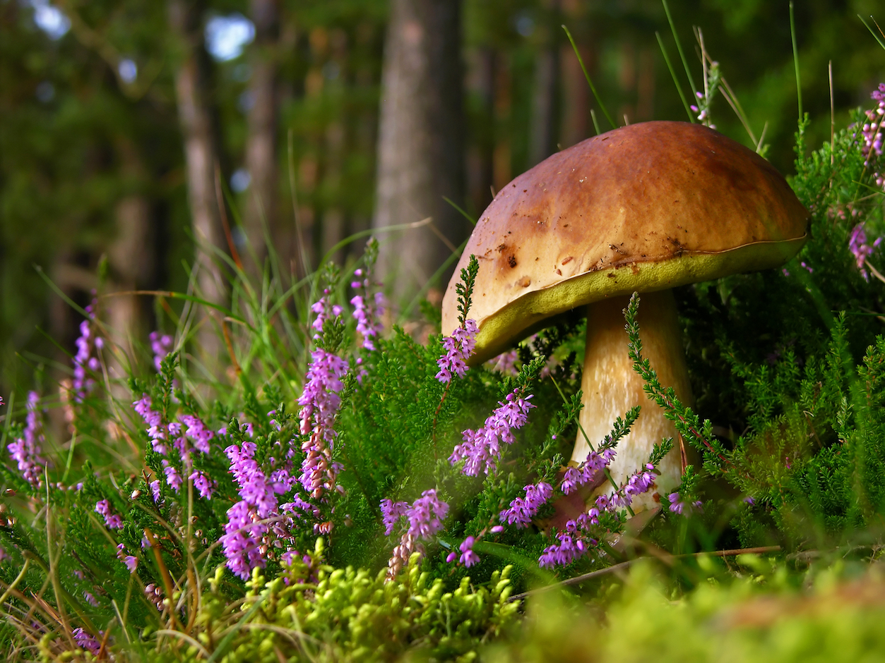 Record levels of atmospheric CO2 are causing major changes. A new study shows how mushrooms can provide new insight into these changes.