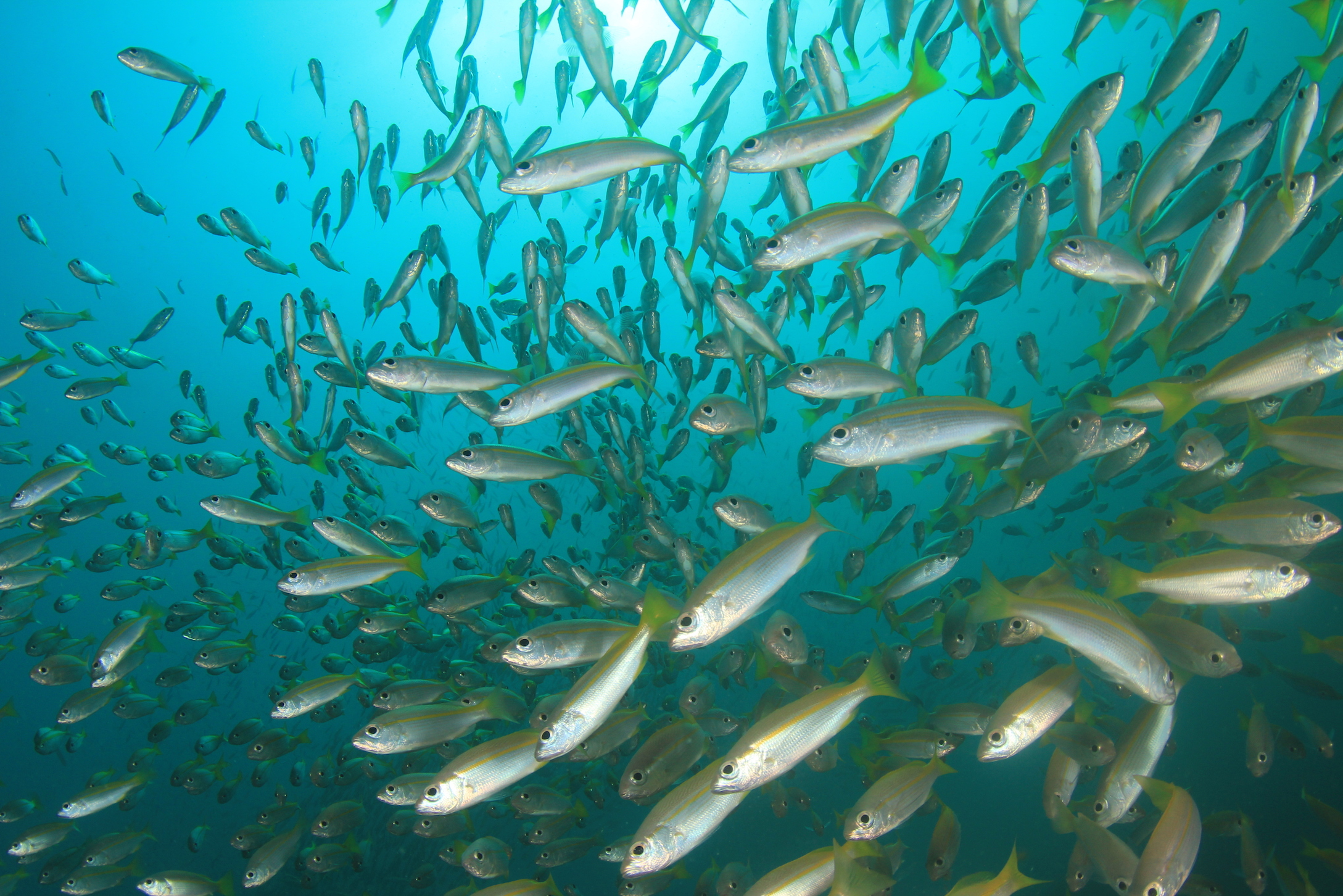 For the first time, scientists have recorded data for a fish migration simply by testing DNA samples in the water.