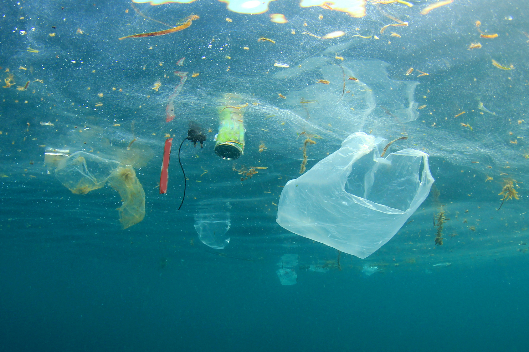 """Despite a low human population, plastic waste is """"abundant and widespread"""" in seas east of Greenland and north of Scandinavia."""