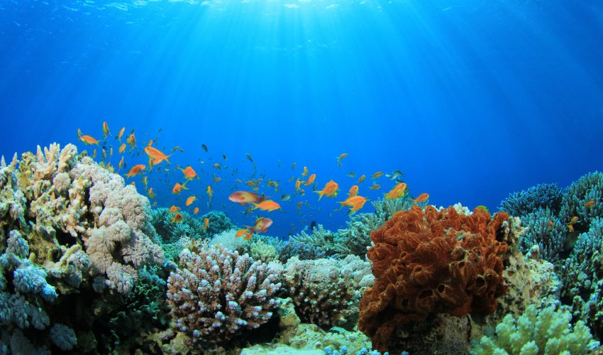 Marvelous Seafloor Erosion Now Threatens Five Large Coral Reefs Tracts In Florida,  The Caribbean And Hawaii