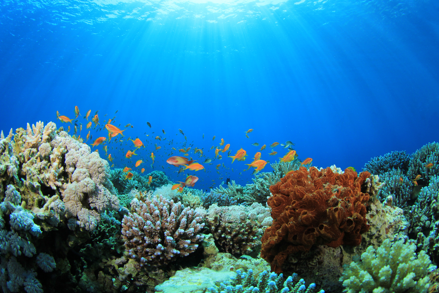 Seafloor erosion now threatens five large coral reefs tracts in Florida, the Caribbean and Hawaii, a new study found.
