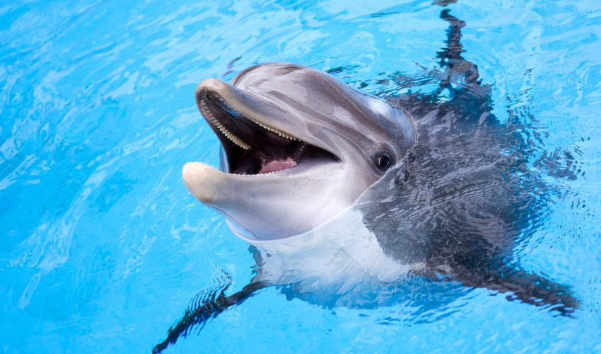 a recent study shows how researchers used inventive new techniques to figure out the internal dynamics of dolphin sex.