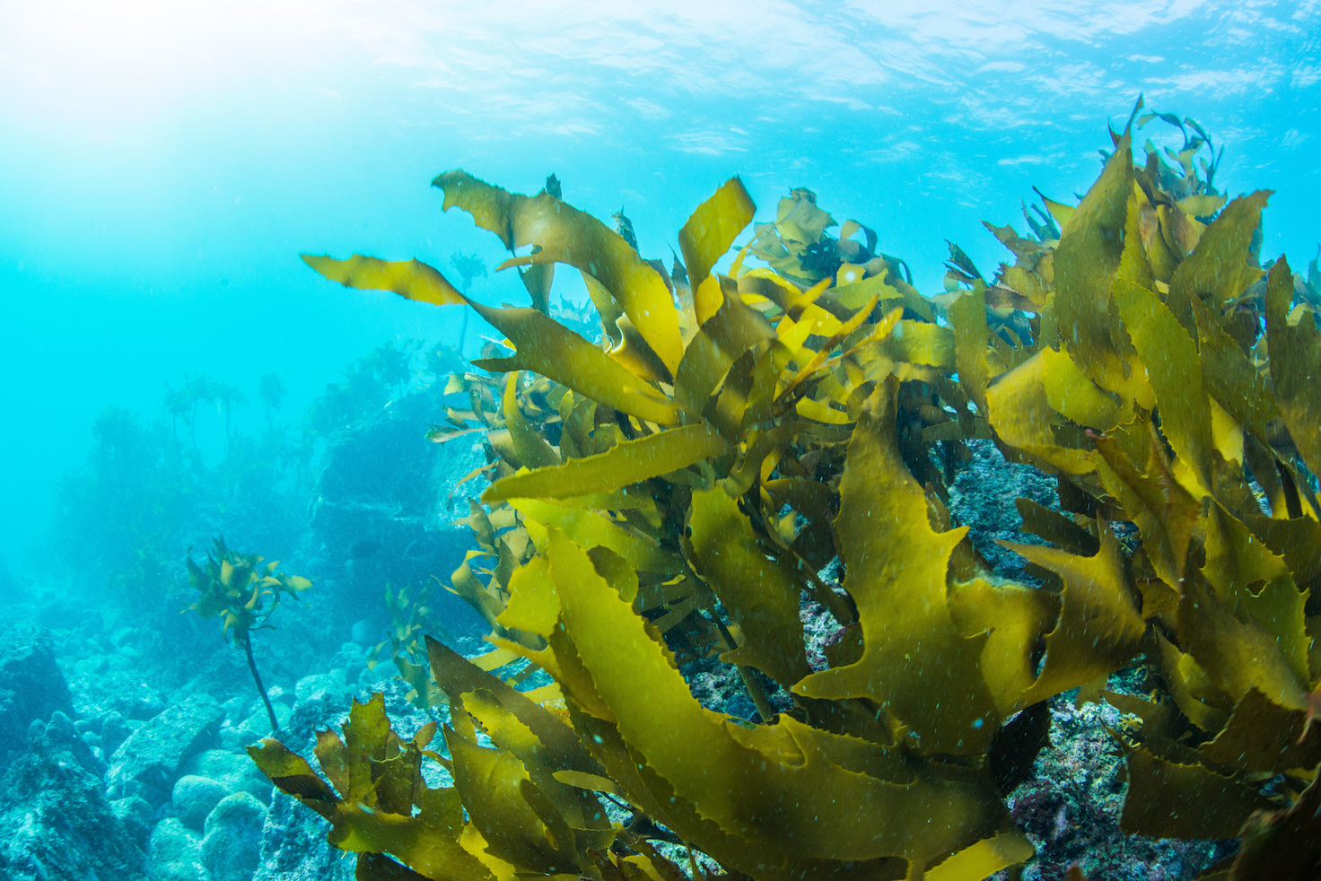 A new material derived from seaweed that can help improve the performance of superconductors, lithium-ion batteries, and fuel cells.