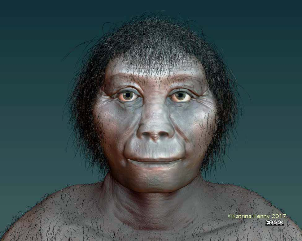 Homo floresiensis, otherwise known as the hobbit, most likely evolved from an ancestor in Africa and not from Homo erectus.