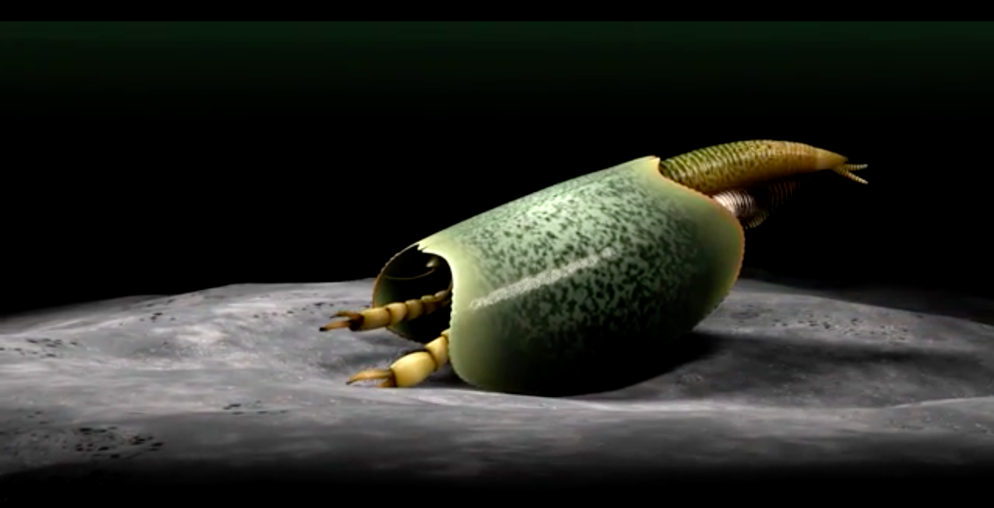 Paleontologists have discovered well-preserved fossils of a sea creature that lived more half a billion years ago.