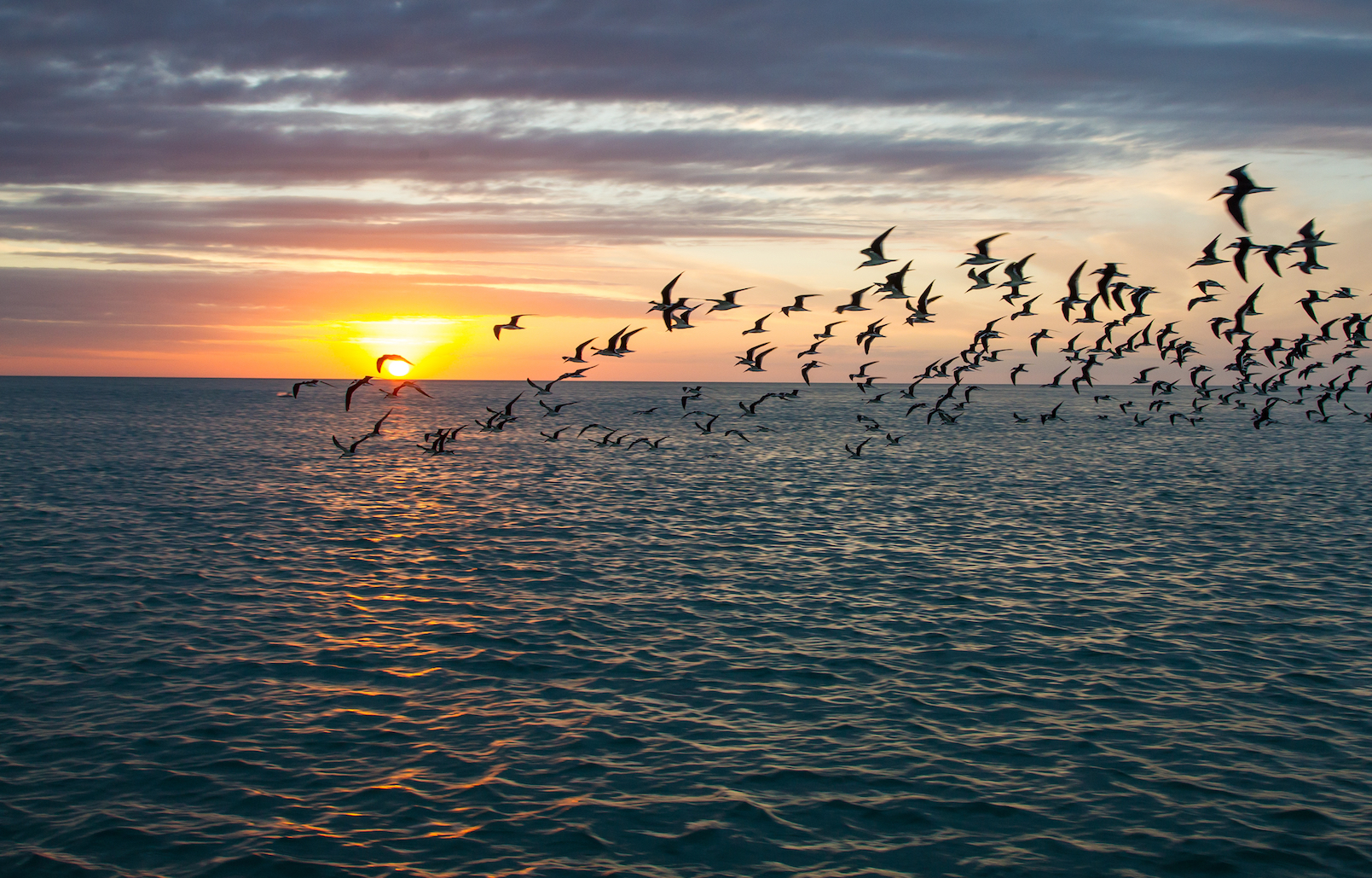 The Gulf of Mexico is a major stopping point for birds that migrate between North America and the Neotropics.