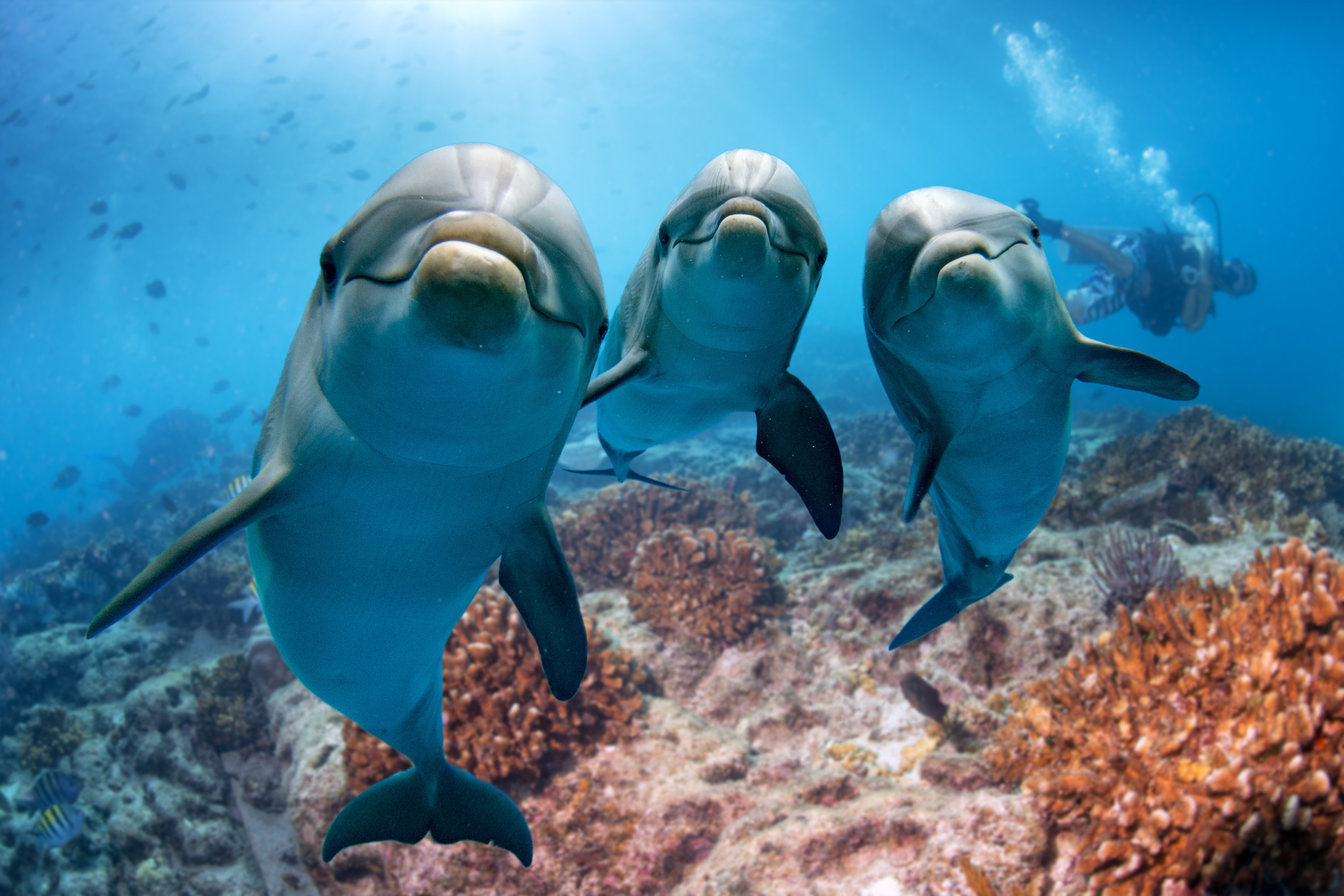 A new study revealed that immune system changes in wild dolphins were brought on by chemicals in the ocean.